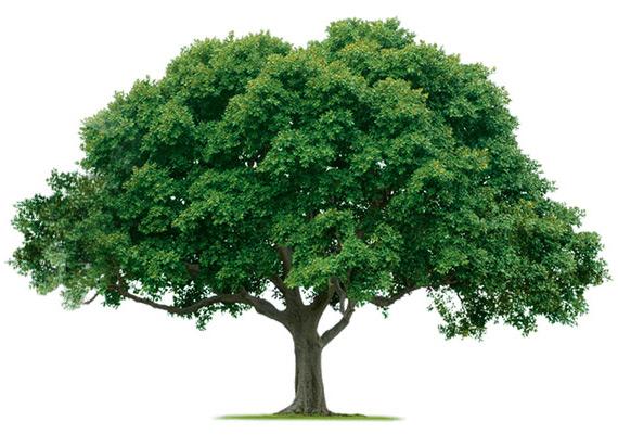 drzewo.jpg